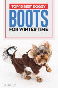 I 13 migliori stivali da cane per l`inverno