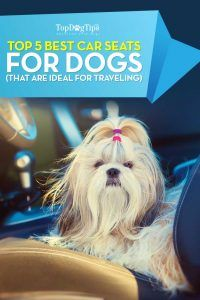 I 15 migliori seggiolini auto per cani