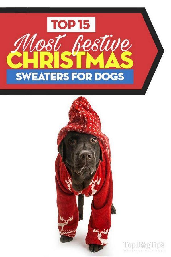 Top 15 migliori maglioni di Natale per cani