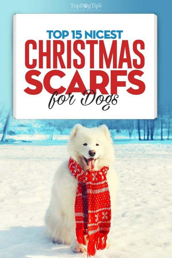 Le 15 migliori sciarpe di Natale per cani