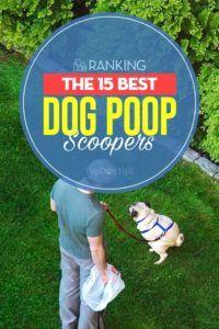 I 15 migliori scoop di cacca di cane