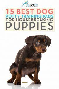 Top 15 migliori vasetti per cucciolo
