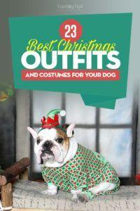 Top 23 abiti e costumi per il miglior cane