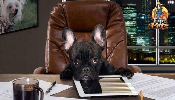 Top 35: come commercializzare i prodotti per cani
