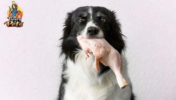 Top # 39: benefici delle diete alimentari crude per cani