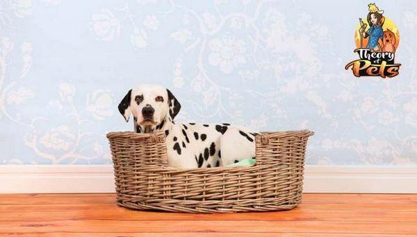 Top 4: benefici per la salute delle cucce dei cani