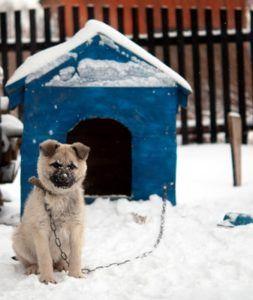 I 5 migliori termosifoni per l`inverno
