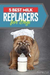 Top 5 migliori sostituti del latte per cuccioli