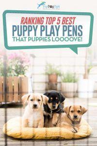 Top 5: migliore penna da gioco per cuccioli e penne per bambini per cani