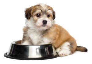 Miglior cibo per cuccioli senza cereali