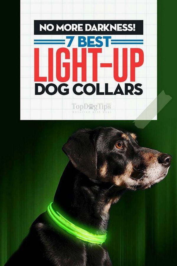 Collari per cani Light Up Top
