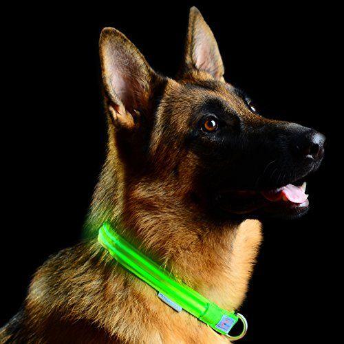 Collare per cane LED con fibbia metallica Pet Industries
