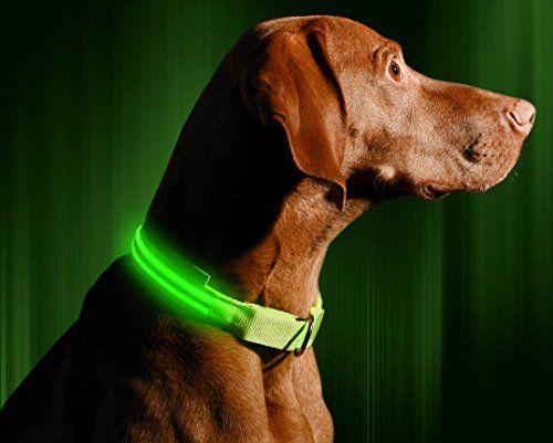 Collare per cani Illumiseen LED