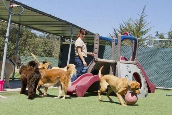 Cosa dovresti sapere prima di iniziare un`impresa di pensione per cani