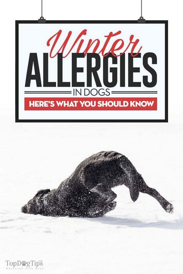 Allergie invernali nei cani: diagnosi, sintomi e trattamenti
